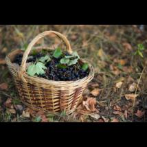 Szedd magad Fekete Berkenye Jegy 6 kg ( Május 31-ig megvásárolt jegyekre)